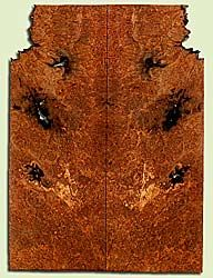 """MAES42734 - Western Big Leaf Maple, Solid Body Guitar Drop Top Set, Med. to Fine Grain Salvaged Old Growth, Excellent Color& Burl, GreatGuitar Wood, Note: Bark inclusions and voids, 2 panels each 0.28"""" x 8.25"""" x 22.5"""", S2S"""